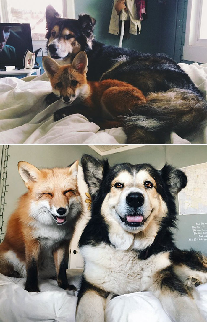 animal-friends-growing-up-together-01
