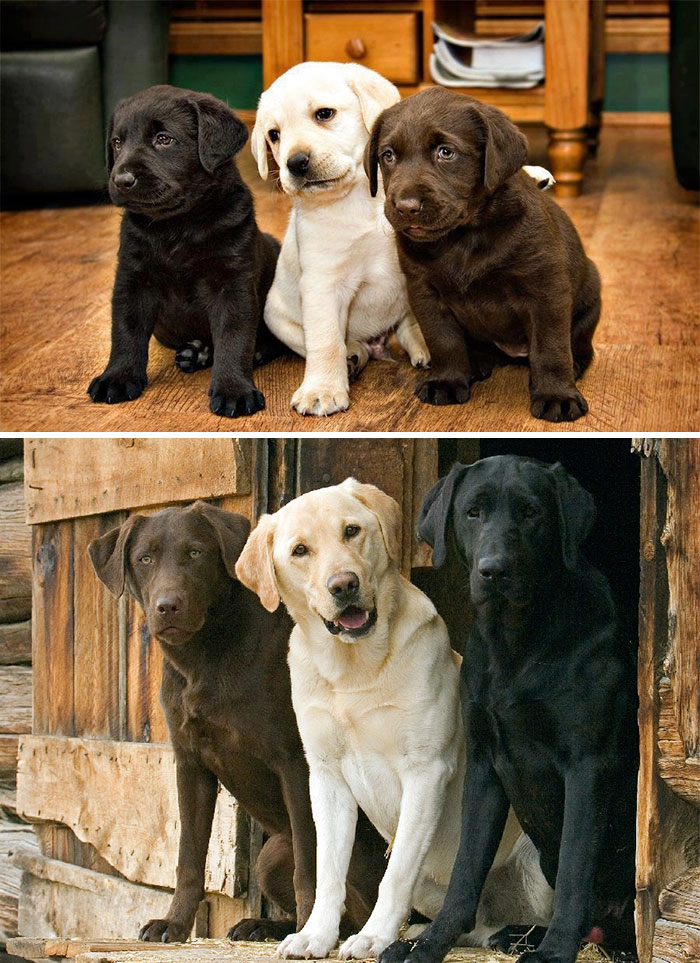 animal-friends-growing-up-together-02