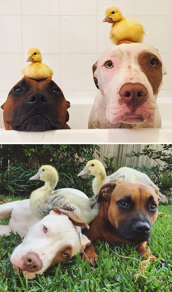 animal-friends-growing-up-together-07