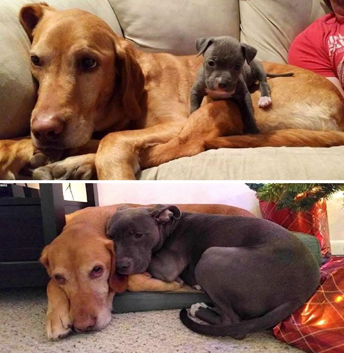 animal-friends-growing-up-together-14