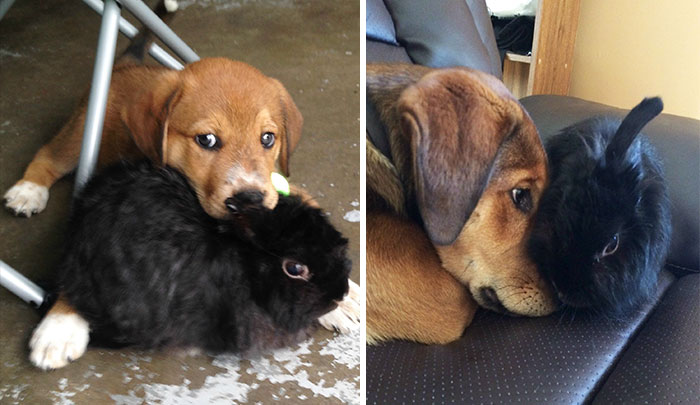 animal-friends-growing-up-together-15