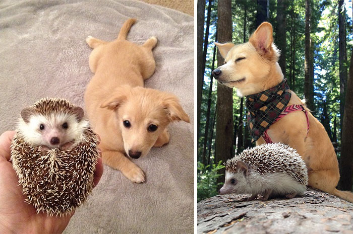 animal-friends-growing-up-together-21