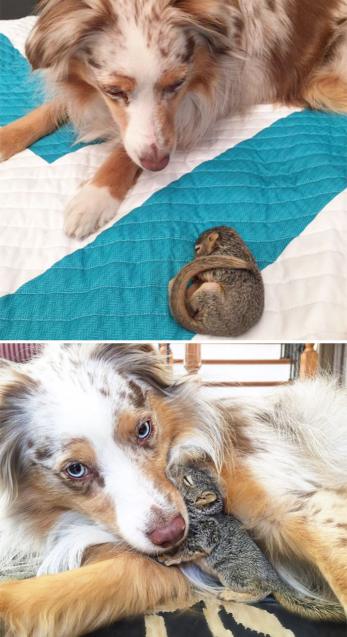 animal-friends-growing-up-together-23