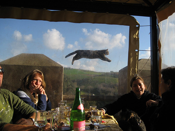 funny-cat-photobombs-2-58e21c717a021__605