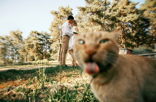 funny-cat-photobombs-56-58e60f5d64fa4__605
