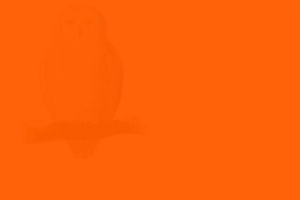 1-551-1170x780